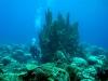 kosrae-diving-coral